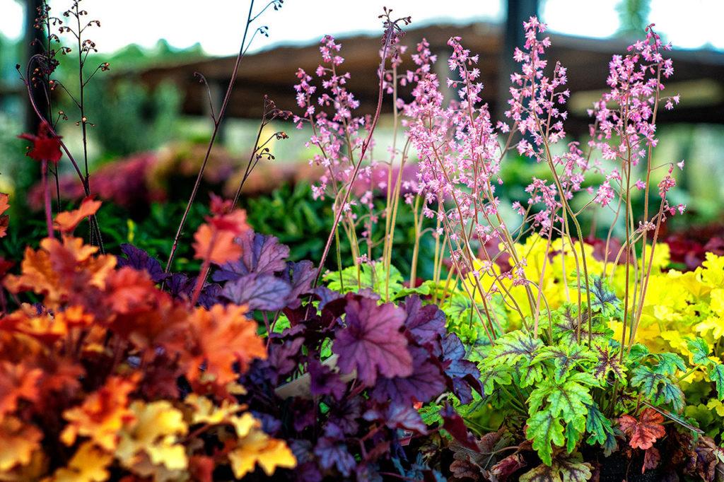 PORTADA-tu-centro-de-jardinería.jpg